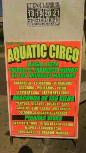 circo acuatico