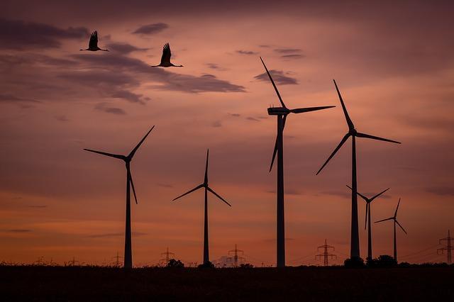 Instamos al Gobierno a preservar y proteger los valores ecológicos, como las aves esteparias, ante los numerosos proyectos eólicos en Aragón