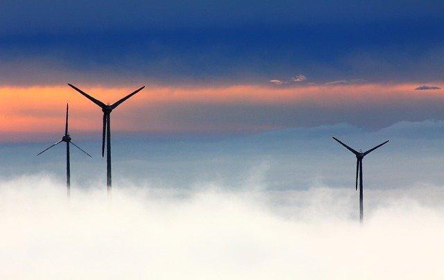 Solicitamos al Gobierno los datos sobre el impacto sobre la biodiversidad de las instalaciones de energía eólica